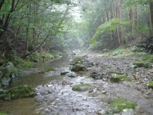 川はこんな感じ。